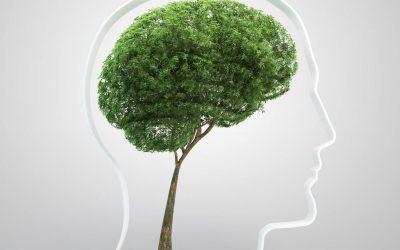 La teoría del color y los efectos positivos del verde en las personas