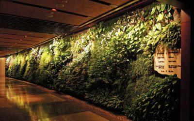 Ventajas de los jardines verticales hidropónicos