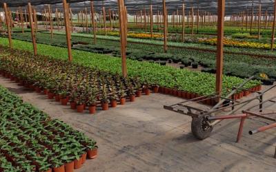 Especies de plantas para jardines verticales
