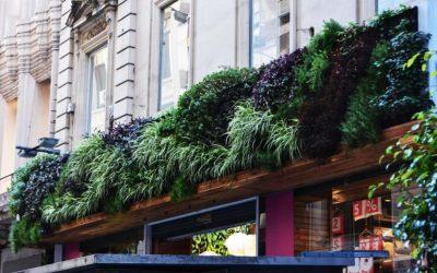 Como en el muro la hiedra: el aprovechamiento de espacios subutilizados para agregar naturaleza en la ciudad